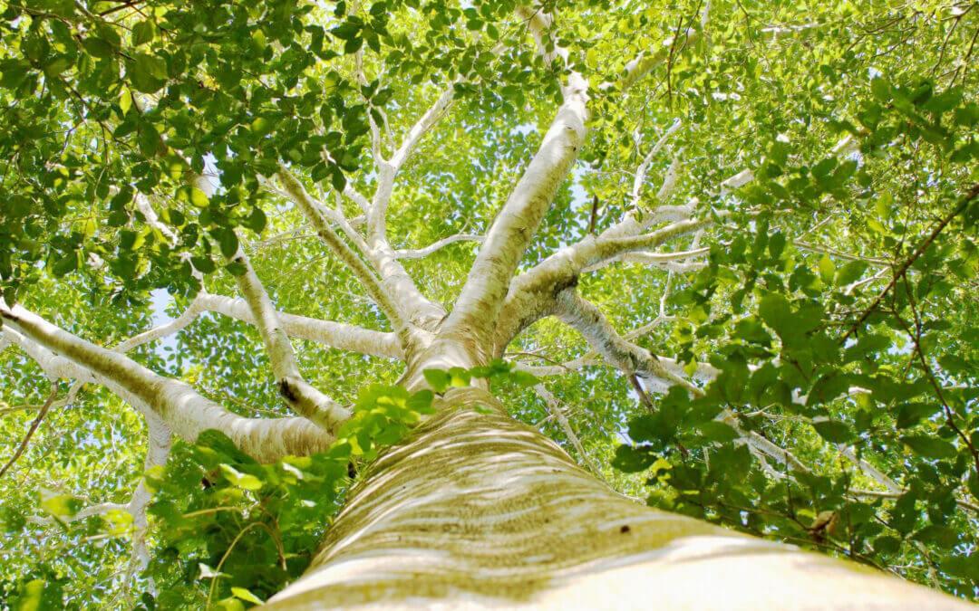 Zimex unterstützt Trees for All